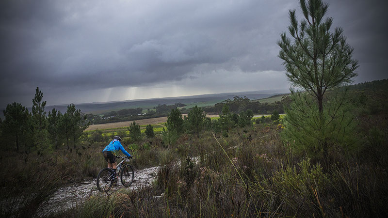 8 truly Napier experiences on your Patat Fest run & cycle